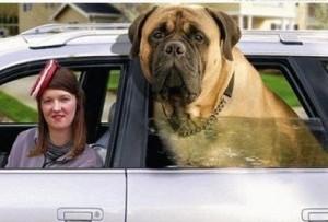 In the Katy Car